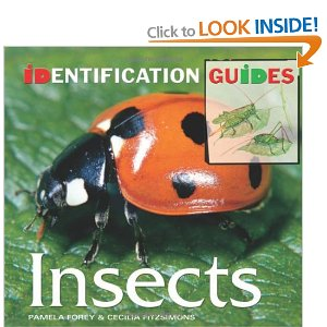 Insects - Pamela Forey