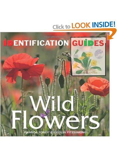 Wild Flowers, Pamela Forey
