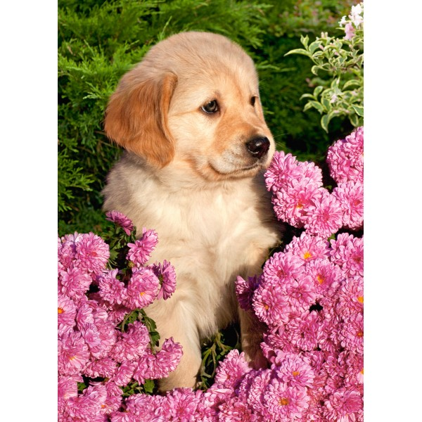 Puzzle 260 Pui de Golden Retriever