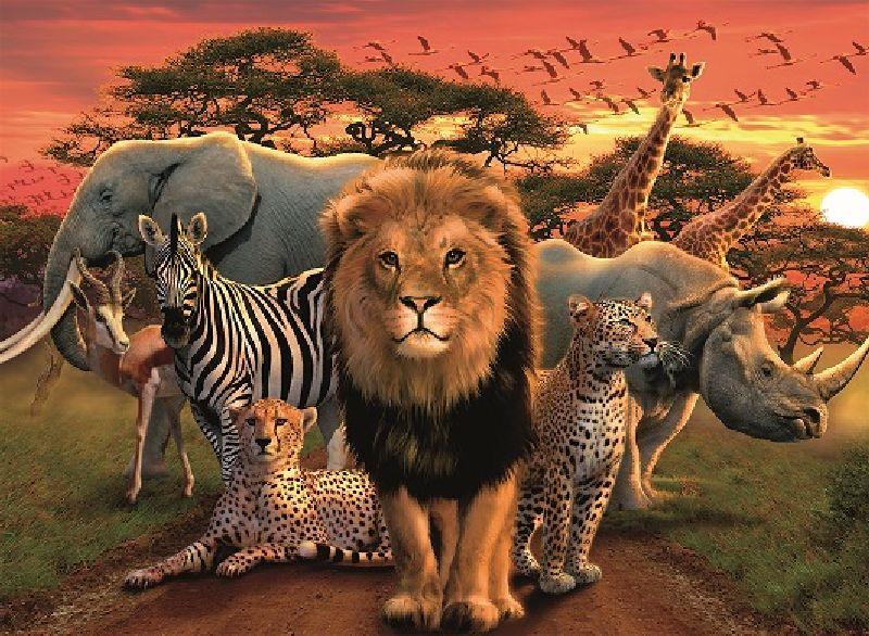 Puzzle splendoare africana, 500 pcs