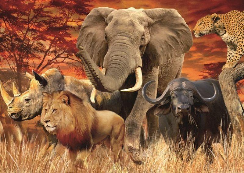 Puzzle cele cinci mari animale, 1000 pcs
