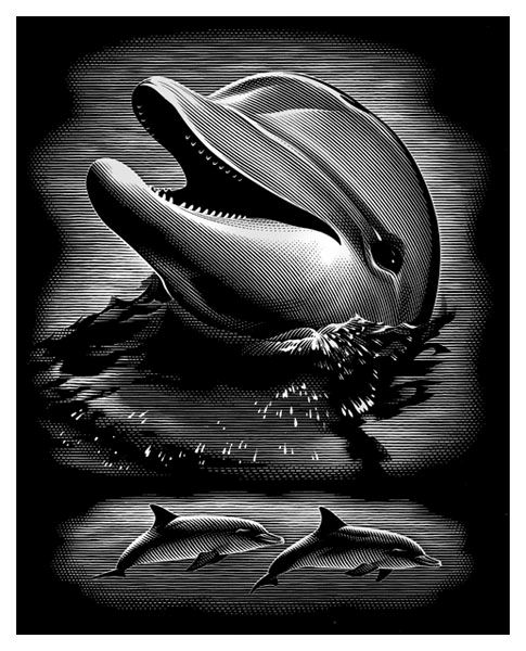 Gravura pe numere,Reeves,Dolphin