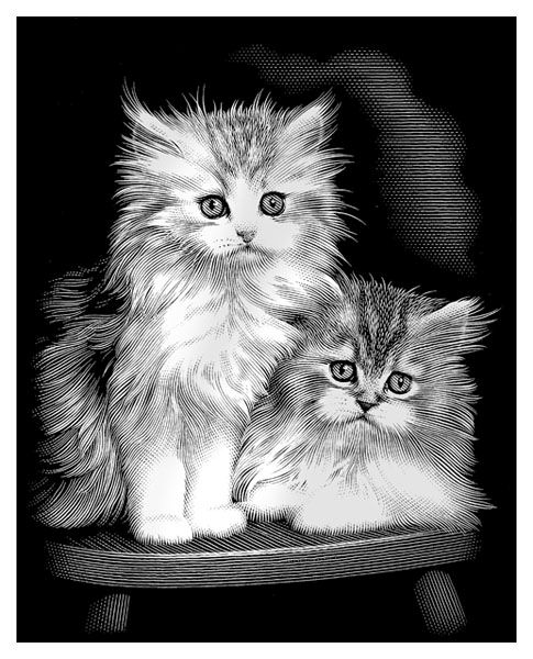 Gravura pe numere,Reeves,Fluffy Kittens