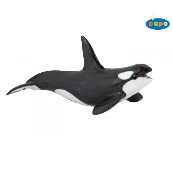Balena ucigasa orca