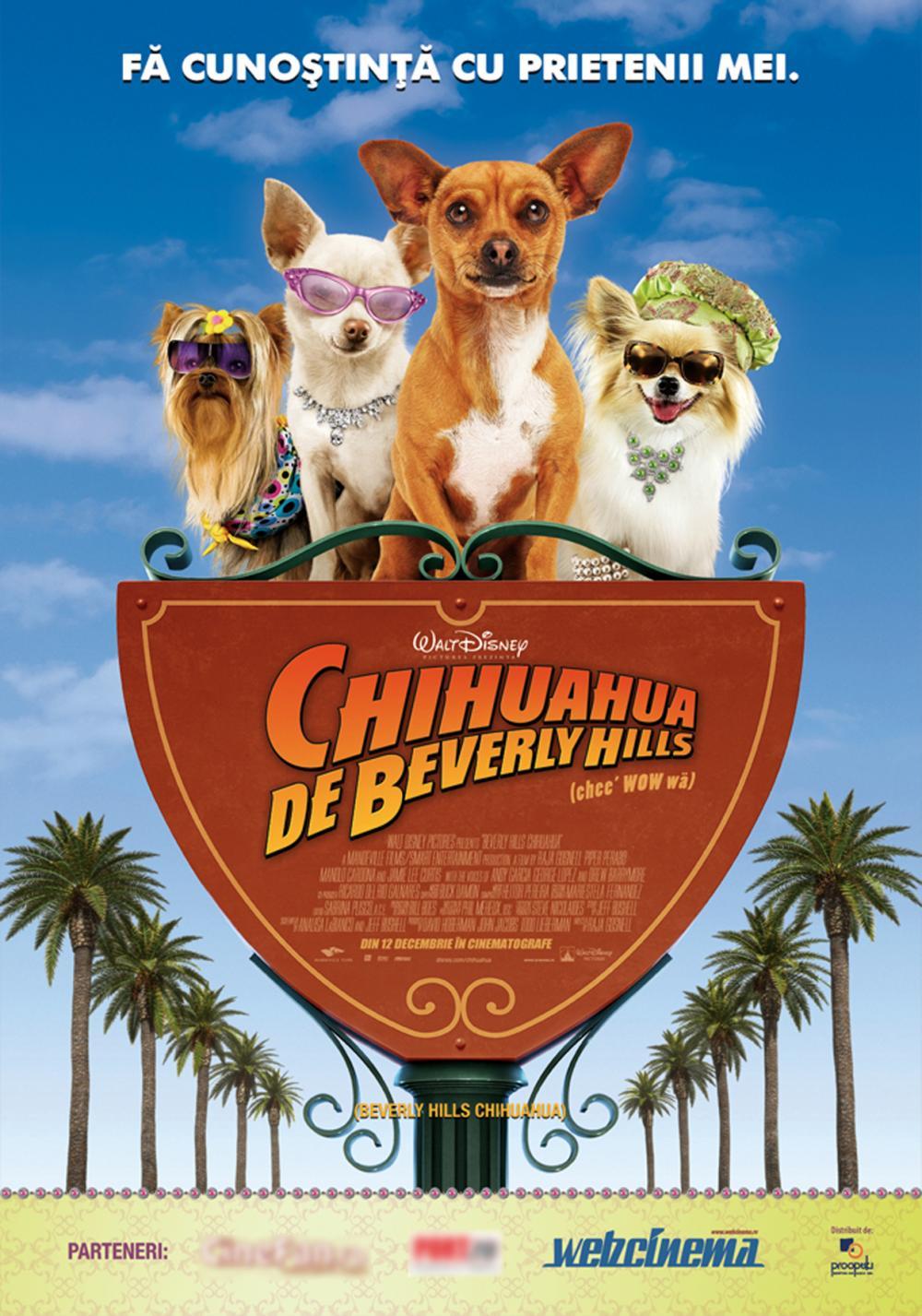 CHIHUAHUA DE BEVERLY HI BEVERLY HILLS CHIHUAHUA