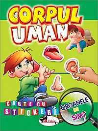 CORPUL UMAN - ORGANELE DE SIMT