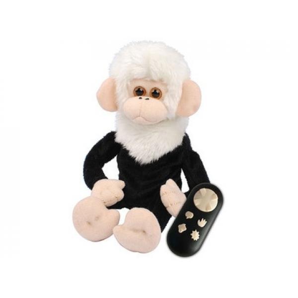 Dave maimutica buclucasa - The Cheeky Monkey