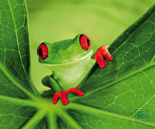 Mouse pad Speedlink Silk ,Frog
