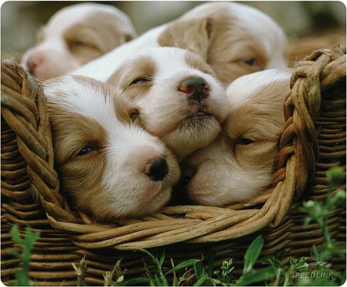 Mouse pad Speedlink Silk,Dogs