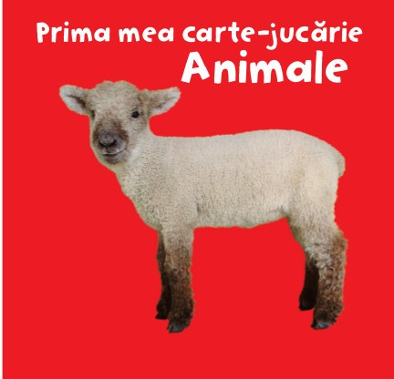 PRIMA MEA CARTE - JUCARIE. ANIMALE