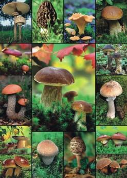 Puzzle Ciuperci, 1000 piese