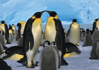 Puzzle Pinguini, 1000 piese