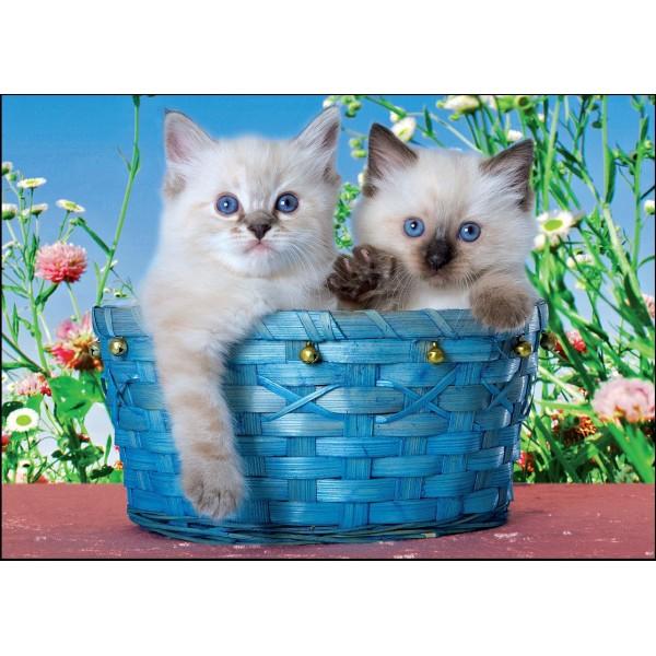 Puzzle Pisicute in cos albastru,99 piese