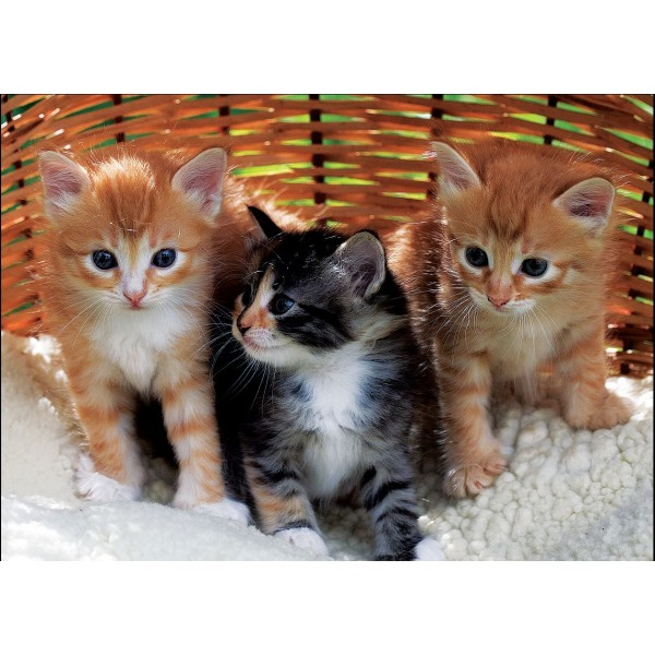 Puzzle Trei pisicute, 99 piese