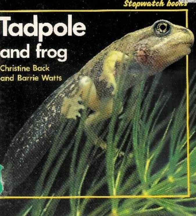 Tadpole & frog (stop watchbook)