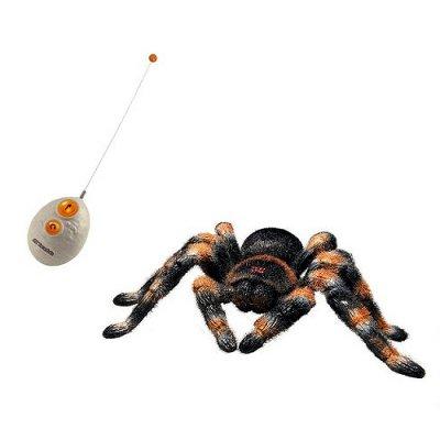 Tarantula radiocomandata