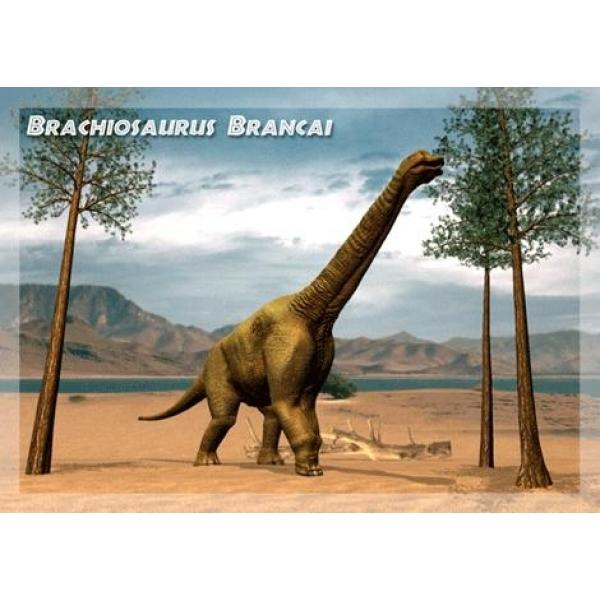 Vedere 3D, Brachiosaurus Brancai