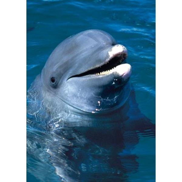 Vedere 3D, Delfin