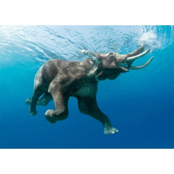 Vedere 3D, Elefant innotand