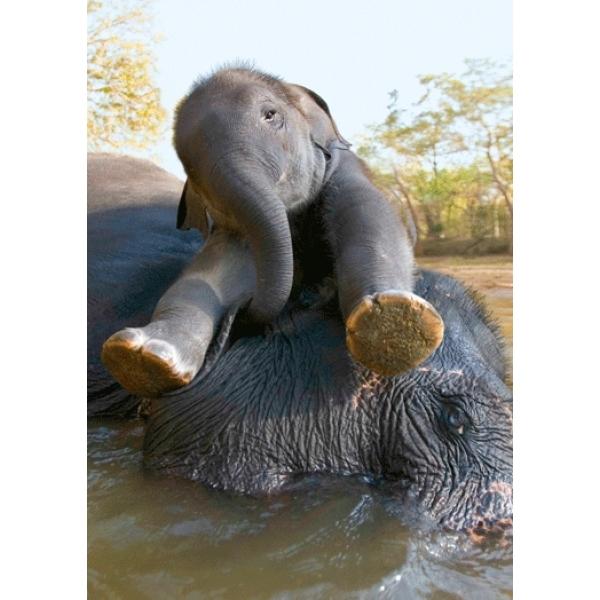 Vedere 3D, Elefanti la scaldat