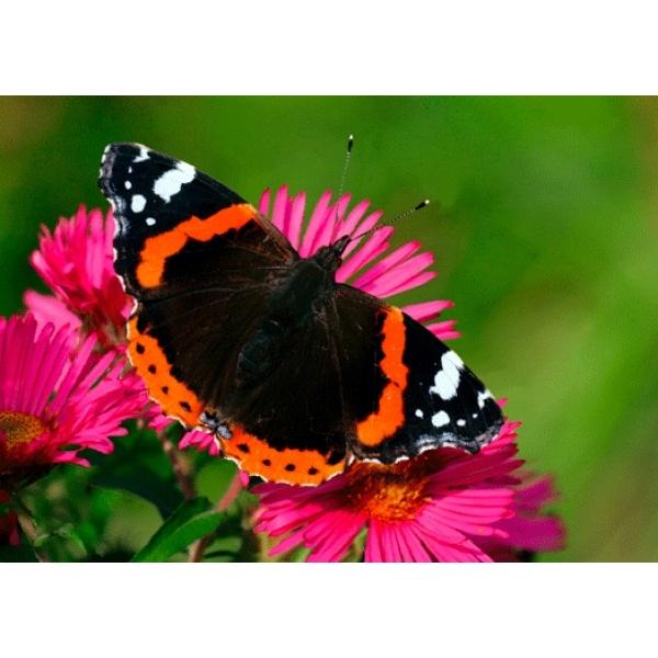 Vedere 3D, Fluture pe floare
