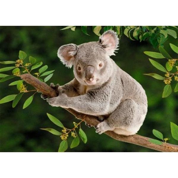 Vedere 3D, Koala