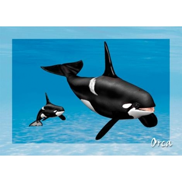 Vedere 3D, Orca