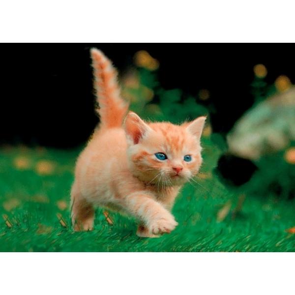 Vedere 3D, Pisica in misiune