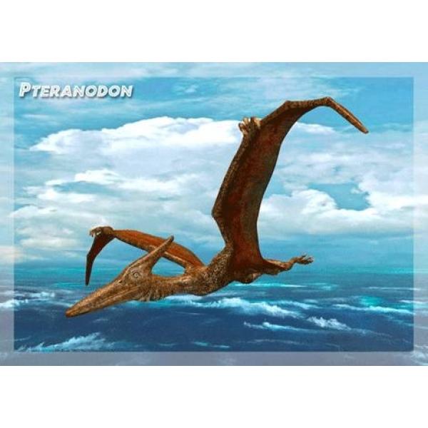 Vedere 3D, Pteranodon