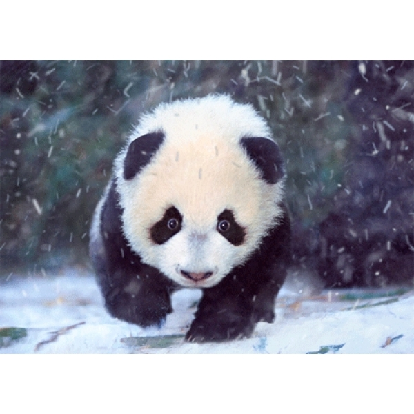 Vedere 3D, Pui urs Panda