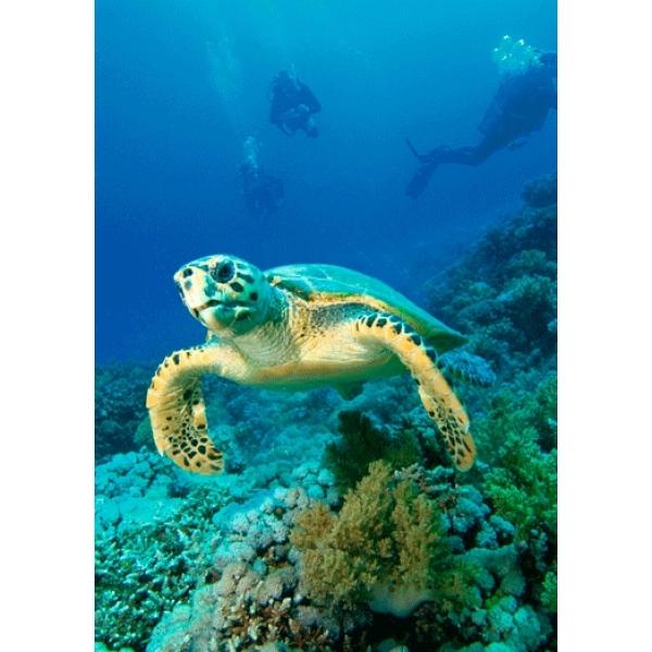 Vedere 3D, Testoasa marina