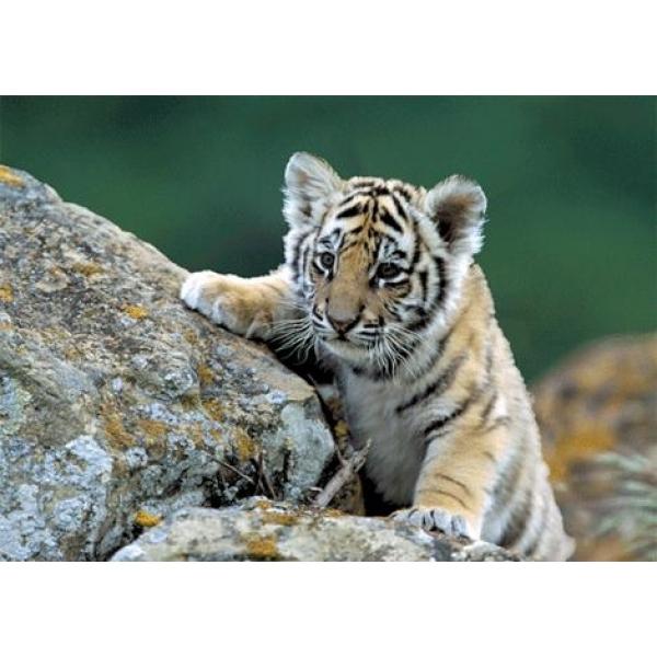 Vedere 3D, Tigru Siberian