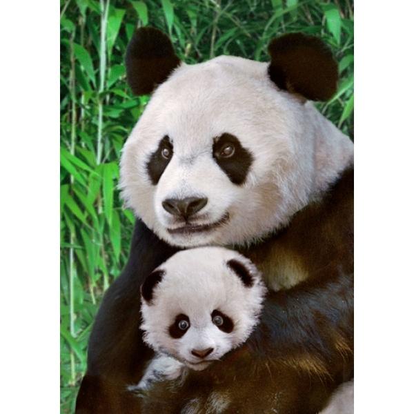Vedere 3D, Urs Panda cu pui