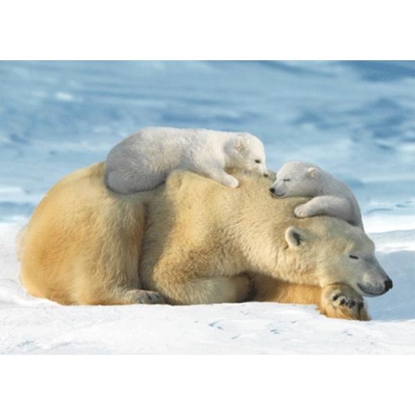 Vedere 3D, Urs Polar cu pui