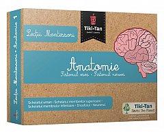 Lectii Montessori - Anatomie: Sistemul osos, Sistemul nervos