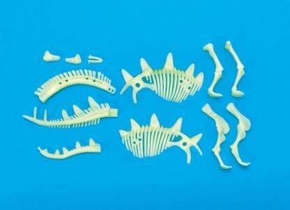 Schelet Stegosaurus reflectorizant, Brainstorm, 6 ani+