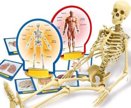 Experimentele micului geniu - Corpul uman, Lisciani, 6 ani+