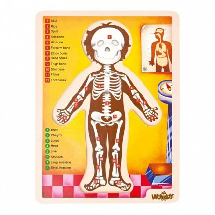 Puzzle Corpul uman, lemn, Woody